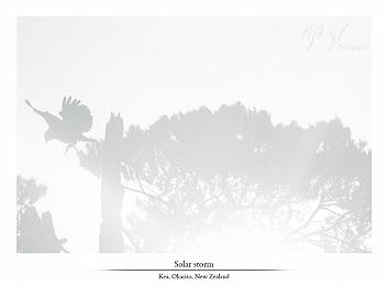 Birds gallery update