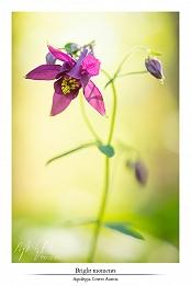 Floral pleasures